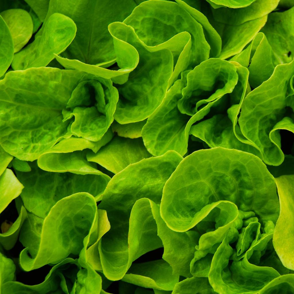 Tonnes de salade